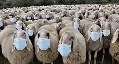 sheep-1024x550